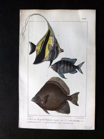 Lacepede & Oudart C1830 Hand Col Fish Print. Chaetodon 96